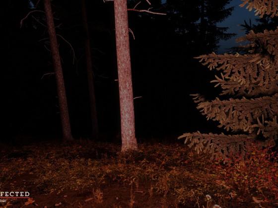 Woods at night!