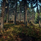 The Bohemian Forest