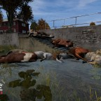 Cow Carnage